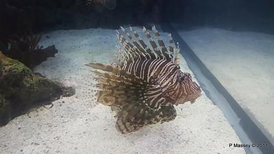 Aquarium at Mandalay Bay Las Vegas 02-04-2017 02-23-21