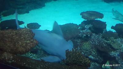 Aquarium at Mandalay Bay Las Vegas 02-04-2017 02-26-11