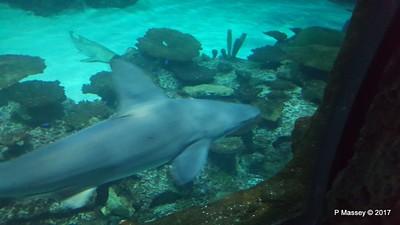 Aquarium at Mandalay Bay Las Vegas 02-04-2017 02-25-53