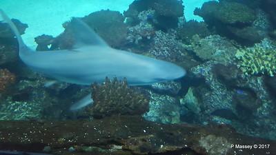 Aquarium at Mandalay Bay Las Vegas 02-04-2017 02-26-01
