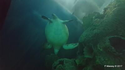 Aquarium at Mandalay Bay Las Vegas 02-04-2017 02-27-34