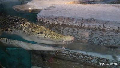 Mandalay Bay Aquarium PDM 01-04-2017 17-16-42