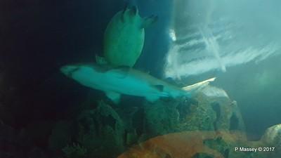 Aquarium at Mandalay Bay Las Vegas 02-04-2017 02-26-46
