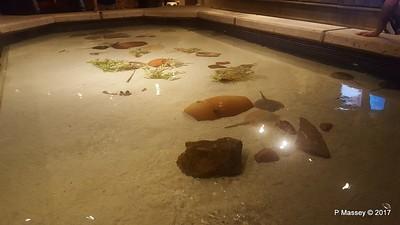 Aquarium at Mandalay Bay Las Vegas 02-04-2017 02-22-57