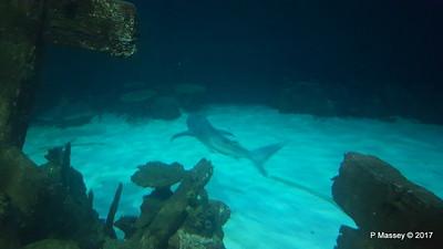 Aquarium at Mandalay Bay Las Vegas 02-04-2017 02-25-30