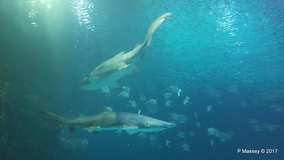 Aquarium at Mandalay Bay Las Vegas 02-04-2017 02-27-11