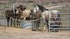 Hualapi Ranch Southwestern Peach Springs Arizona DRM 02-04-2017 15-06-41