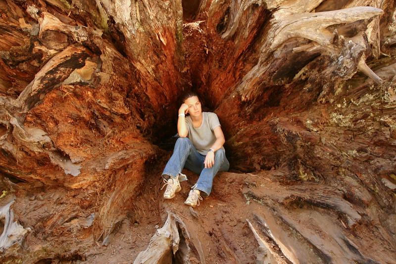 Julie in a tree