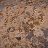 Lichen on a boulder, Mesa Verde