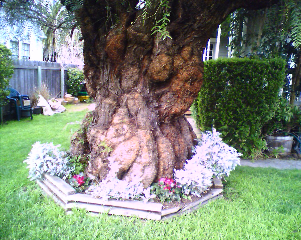 Old Stump <br /> <br /> - Taken at 10:37 PM on March 21, 2006; cameraphone upload by ShoZu