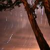Star Trail under gum tree, Canberra