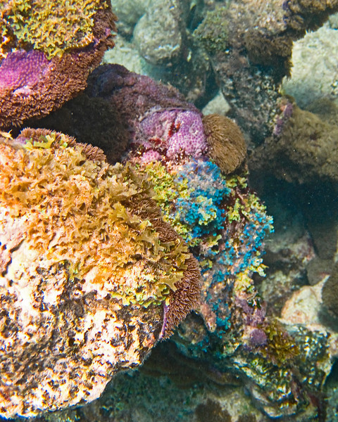 Gorgeous Colors of the Coral & Plants