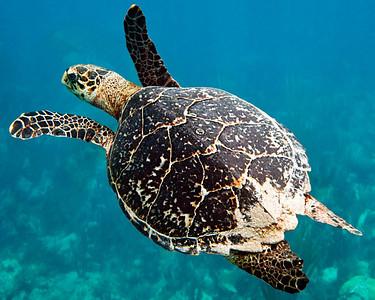 Underwater Best/Favorite Pictures