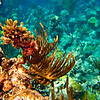 Underwater Perfection