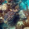 Turtle on Mahoebay, 2-08
