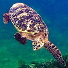MY FAVORITE TURTLE PICTURE IN 9/2008!