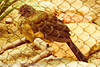 An unidentified bird taken Jun. 27, 2012 in Salt Lake City, UT.