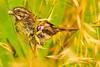 An unidentified bird taken Jun 12, 2011 near Eureka, CA.