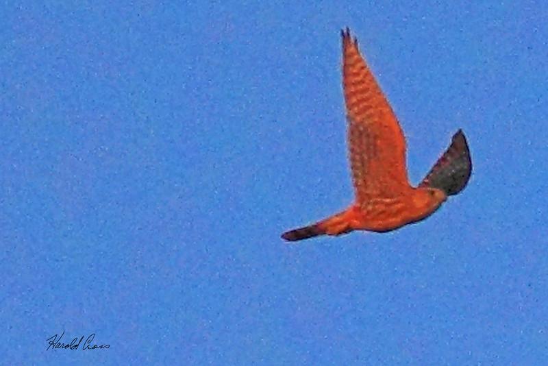 An unidentified bird taken Aug 19, 2010 near Grand Junction, CO.