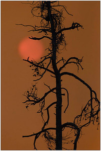 Sun & Tree, WY