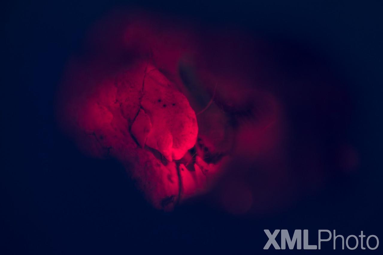 MMXV.I.XVIII
