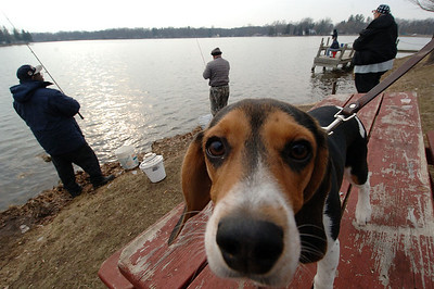 Beagle fishing