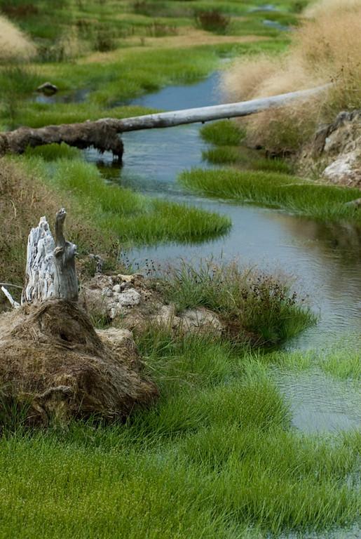 A natural stream
