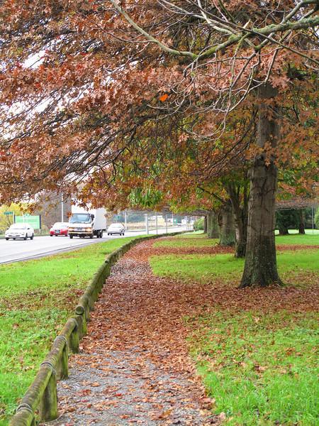 Autumn Leaves Jun 2010