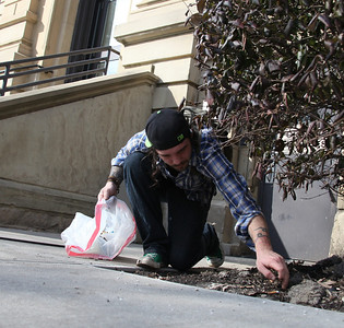 2013_03_10__Sean  Nichols reaches for trash under the bushes at the downtown courthouse  in Elyria as part of the Elyria Urban Garden Initiative. photo by Ray Riedel