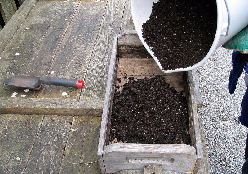 She seeds some plants indoors in flats. First she adds sifted compost.
