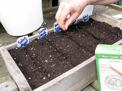 In flats, she plants cabbage, broccoli, bulb fennel, early lettuce, chard, cooking onions, and leeks.