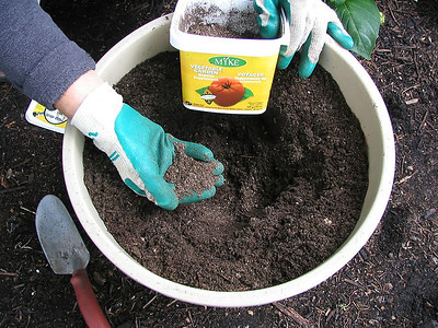 Place 'growth supplement' in a hole ready for planting.