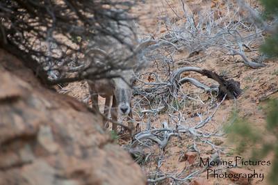 Zion National Park - parent of the little ones
