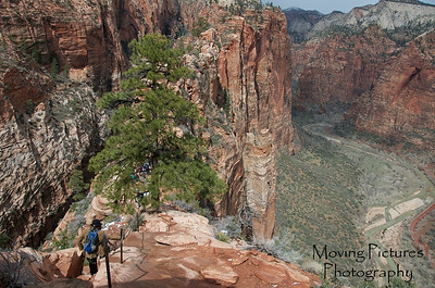 Zion National Park - Trail to Angel's Landing, view on the way back down -> note 1,000 ft dropoff on each side