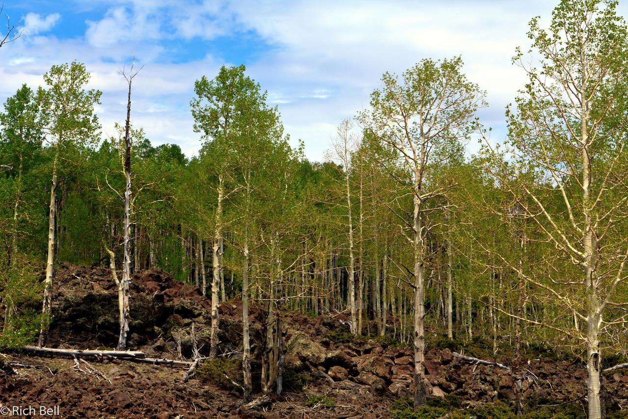20110617 Utah -0052