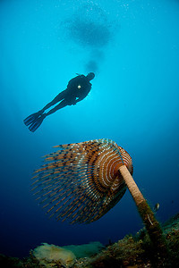 Vidvinkel med dykare