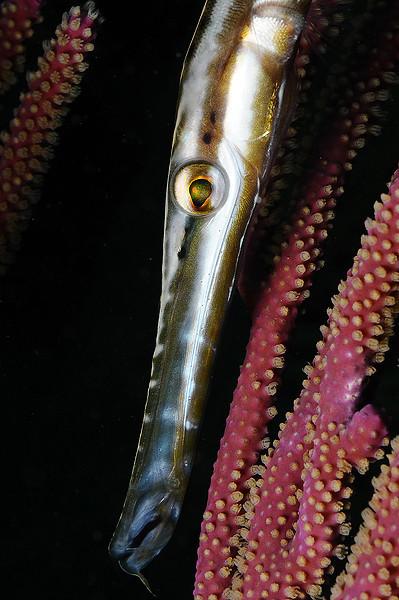 fiskporträtt