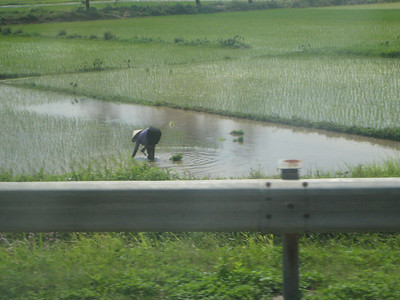 A rice paddy, just outside of Hanoi