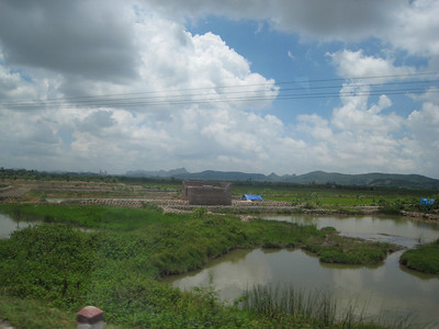 Another rice paddy