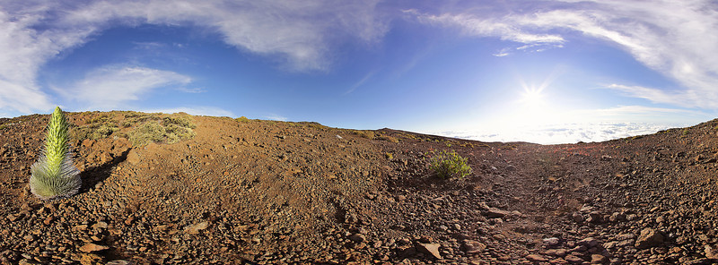 "A view of a rare Silversword plant perched at the 10,000 foot level on the top of Haleakala Crater on the island of Maui, Hawaii. Click on the link to load the 360 pano view by Joe West Photography. <a href=""http://360pano.org/silversword/1.htm"">http://360pano.org/silversword/1.htm</a>"