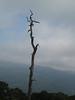 Dead Tree Shanendoah