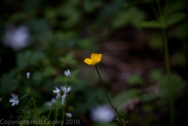 Flowers at Multnomah Falls