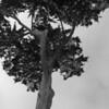Tree along Cliff Drive , Santa Cruz, CA