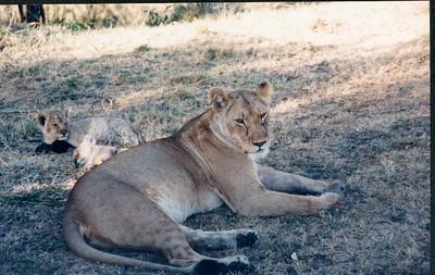 1998 Africa