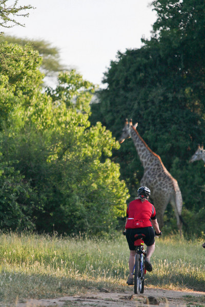 Trish on a bike. Giraffe on foot.