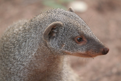 Valley Cycle, church, mongooses