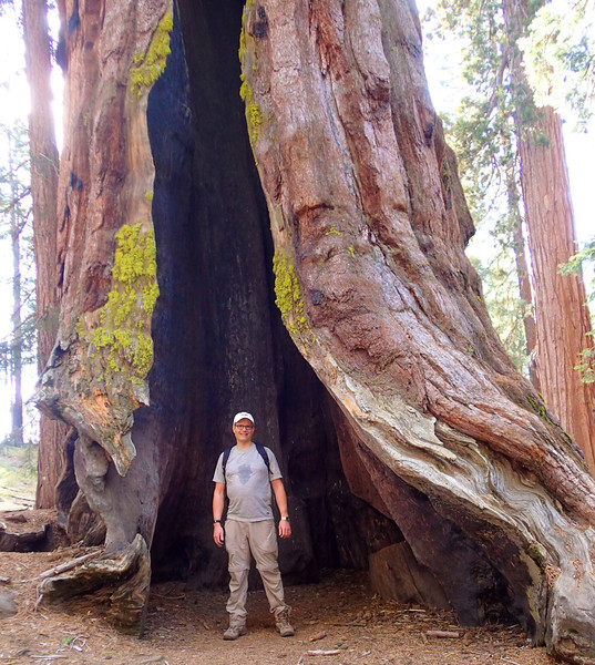 """Vance in burned out """"cave"""" within giant sequoia trunk, Mariposa Grove of Giant Sequoias , Yosemite, CA March 2014."""