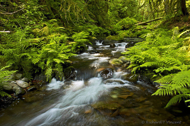 Goldstream Creek