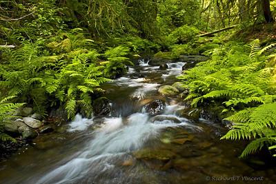 Goldstream Creek