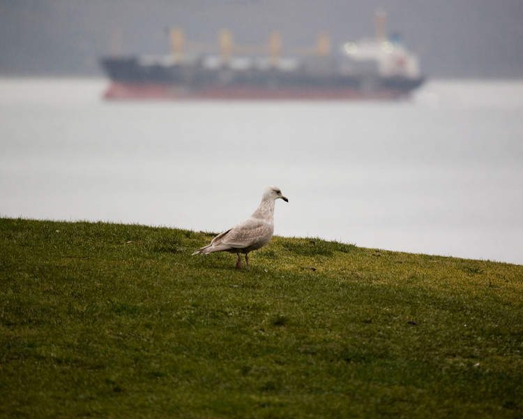 Seagull & the tanker...
